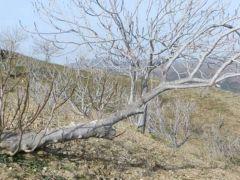 Erozyon incirin geleceği için büyük tehdit.