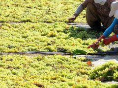 Tarım ürünleri yatırım aracı oluyor.