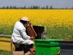 Arıcılık Yatırımlarına %60 Hibe Desteği Çalışmaları Tamamlandı