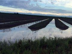 Sel, tarım, hayvancılık ve balıkçılık sektörlerinde 1 milyon lira zarara yol açtı