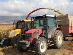 Kelkit'te silajlık mısır hasadı tamamlandı
