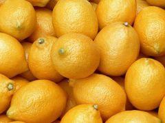 Limon üreticisinin gözü Rusya pazarında