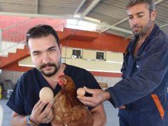 Aydın'da dev yumurta görenleri şaşırttı