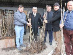Üreticilere Bursa siyahı incir fidanı dağıtıldı