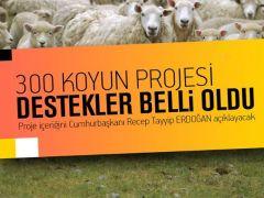 Köyüne dönene 300 koyun projesinin bazı detayları belli oldu!