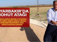 Diyarbakır'da nohut atağı
