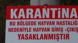 Kocaeli'de şarbon paniği; 3 köy karantinaya alındı