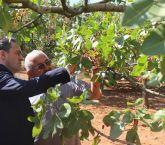 Burdur'da Antepfıstığı Üretimi