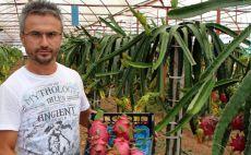 Domates ve biberin masrafından bıktı, ejder meyvesi yetiştiriyor