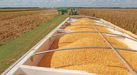 TMO'nun buğday alımına tepki
