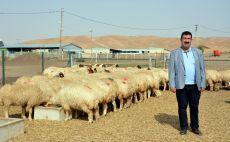 300 koyun projesinde teslimatlar başladı!