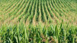 Kimyasal Gübre İle Organik Gübrenin Verim Üzerine Etkisi