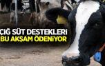 Çiğ süt destekleri Bugün ödeniyor!