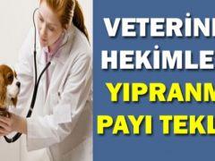 Veteriner Hekimlere Yıpranma Payı Verilmesi Hakkında Kanun Teklifi