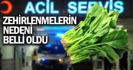 İstanbul'daki gıda zehirlenmesi