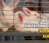 Türkiye'nin ilk tavşan çiftliği Kocaeli'de kuruldu!